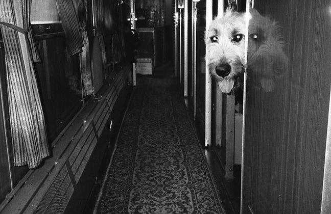 33.5_dog_on_train